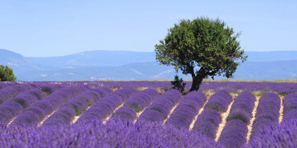 Экскурсия по Провансу и лавандовым полям